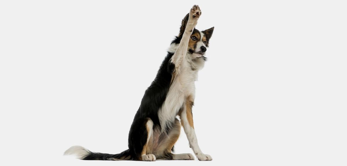 Best Behaviour Dog Training Wiltshire